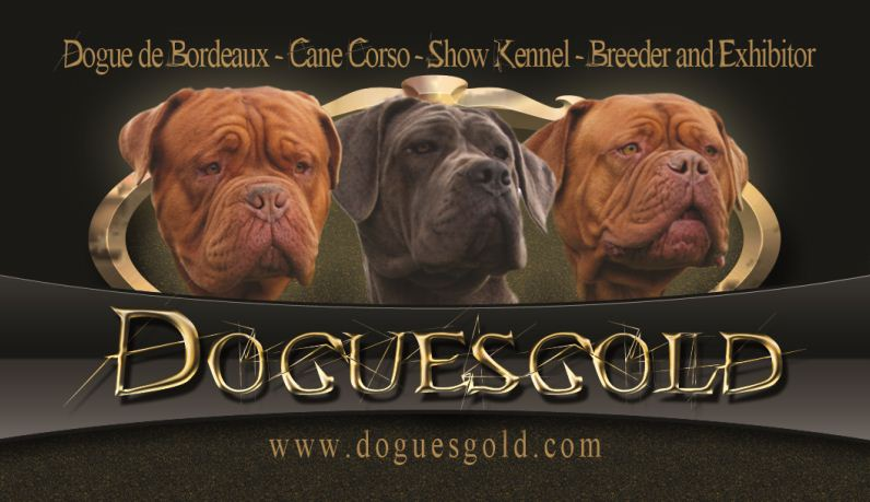 Doguesgold dogue de bordueax